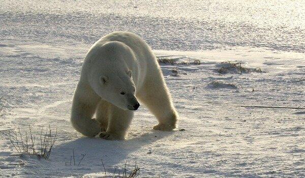 Фильм Місто полярних ведмедів | Домашний Киевстар