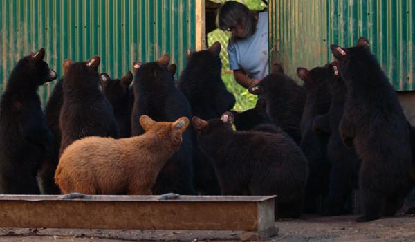 Фiльм Порятунок диких ведмедів | Домашній Київстар